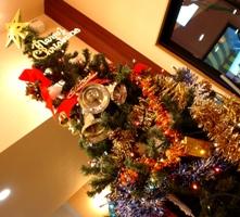 tree071125.JPG