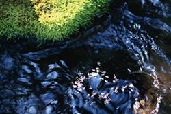 鹿児島特有のシラス台地で濾過された湧き水
